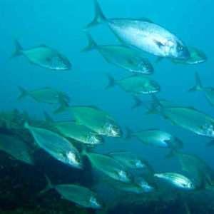 Idea regalo Esperienza di subacquea Full Day – Isole Eolie