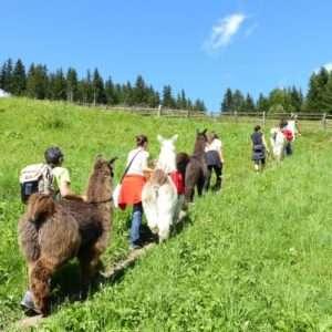 Idea regalo Trekking con i lama in famiglia – Monguelfo-Tesido, Alto Adige