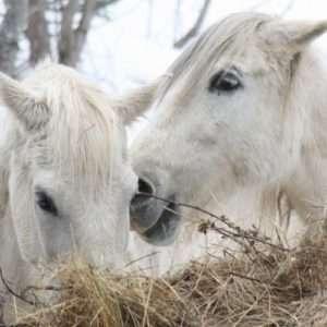 Idea regalo Passeggiate o escursioni a cavallo – Macugnaga