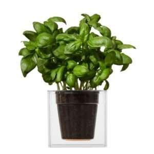 Regalo Cube – Vaso da fiori trasparente