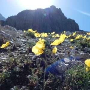 Idea regalo Trekking guidato nel cuore delle Dolomiti – Trentino