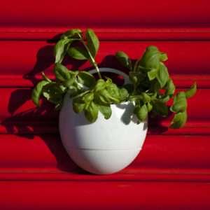 Regalo Eco Pod – Vaso intelligente per piante