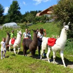 Idea regalo In gita con i lama – Monguelfo -Tesido, Alto Adige a 85 €