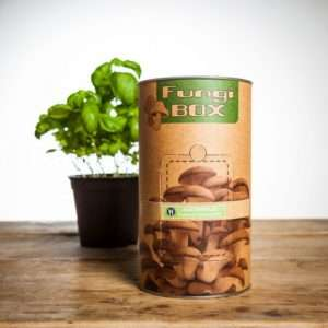 Idea regalo Fungi Box  Coltivare funghi Plerotus in casa