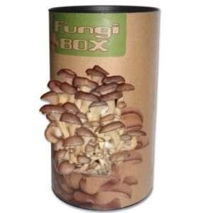 Regalo Fungi Box – Il barattolo dei funghi