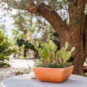 Idea regalo Soggiorno 1 notte con degustazione – Ostuni, Puglia a 140 €