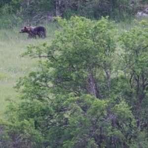 Idea regalo Escursione Sulle tracce dell`orso – Abruzzo
