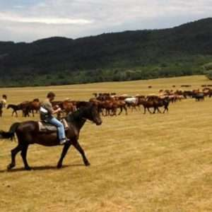 Idea regalo Passeggiata a cavallo per principianti – L`Aquila a 9 €