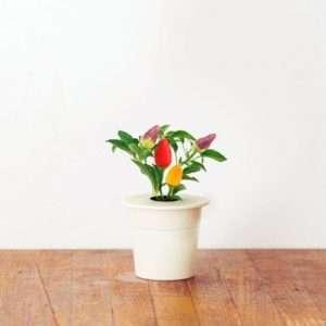 Idea regalo Ricariche Peperoncini per Click&Grow – giardino smart