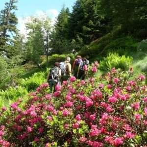 Idea regalo Giornata di trekking sulle Alpi