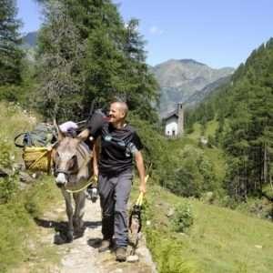 Idea regalo Trekking con gli asini a 30 €