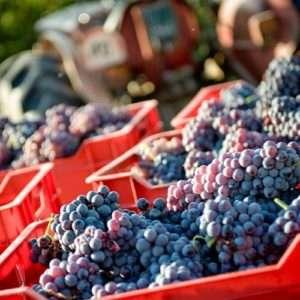 Idea regalo Degustazione guidata di vini veneti – Ponte di Piave,Treviso