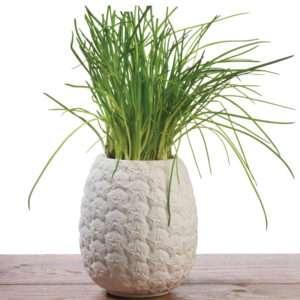 Regalo Vaso per fiori Ananas