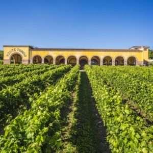 Idea regalo Speciale degustazione con visita a cantina – Verona