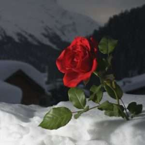 Idea regalo Week-end romantico in montagna – Sestriere a 269 €