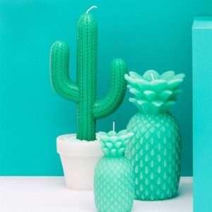 Idea regalo Candela Cactus