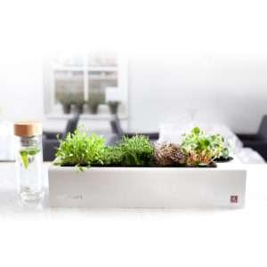 Regalo CressToday – mini giardino da interni – Versione con illuminazione a LED (montaggio a parete)