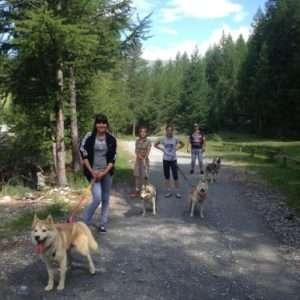 Idea regalo Dog trekking: escursione con cani Husky – Sestriere