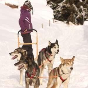 Idea regalo Escursione con cani da slitta e soggiorno – Trentino
