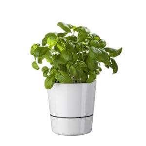 Regalo Vaso Auto-innaffiante Flower Pot Herb Hydro