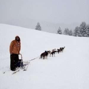 Idea regalo Corso di sleddog: guida una slitta trainata da Husky – Trentino