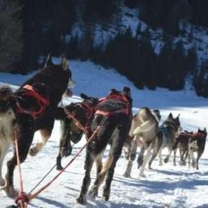 Idea regalo Soggiorno e sleddog a Madonna di Campiglio – Trentino