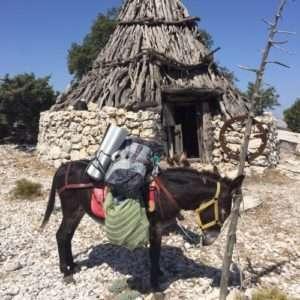 Idea regalo Trekking con gli asini – Sardegna
