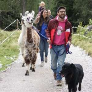 Idea regalo Trekking in compagnia di lama, alpaca e asini – Trentino